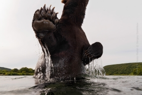 Sergey_Gorshkov-Nature_Photo_Portal-Nature_Talks_Photo_Festival-Bear_02455-14.40.52