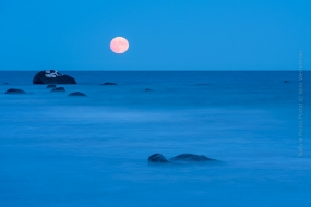 Wildlife_Photography-Nature_Photo_Portal-Wim_Werrelman-Landscape_Photography-Blue_Moon-3