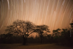 Wildlife_Photography-Nature_Photo_Portal-Wim_Werrelman-Landscape_Photography-Star_Trails_in_Zambia-3
