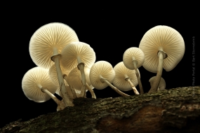 Macro_Photography-Nature_Photo_Portal-Bart-Stornebrink-Mushroom-2