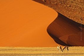 Nature_Photo_Portal_Daniel_Montero_namib