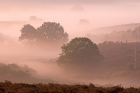 Sunrise at the Posbank. With this picture I won the first prize in a Dutch landscape photography contest. It was early mornig and fog was hanging over the heathland at the Posbank national Park on the Veluwe in the Netherlands.