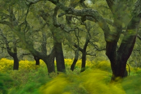 Cork oak forest, Los Alcornocales Natural Park, Andalucia, Spain.