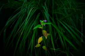 Flower photography on Nature Photo Portal by Jarno van Bussel-3