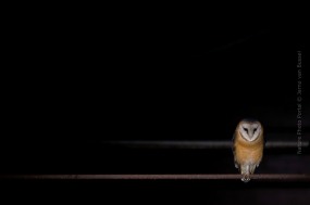 Wildlife photography on Nature Photo Portal by Jarno van Bussel