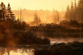 Nature_Photo_Portal_Kyle_McDougall_MorningWarmth