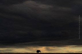 Nature_Photo_Portal_Marijn_Heuts_African-Elephant