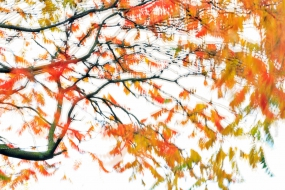 Nature_Photo_Portal_Marijn_Heuts_Autumn-Tree
