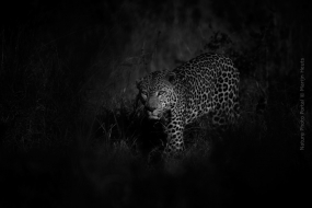Nature_Photo_Portal_Marijn_Heuts_Leopard