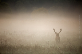 Nature_Photo_Portal_Marijn_Heuts_Red-Deer