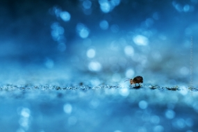 Macro_Photography-Nature_Photo_Portal-Myriam_Dupouy-Collembola