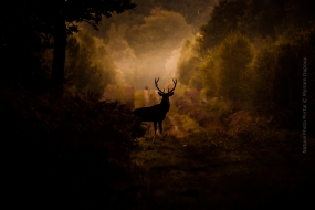 Wildlife_Photography-Nature_Photo_Portal-Myriam_Dupouy-Deer2