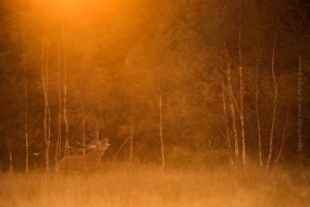 Wildlife_Photography-Nature_Photo_Portal-Myriam_Dupouy-Deer3