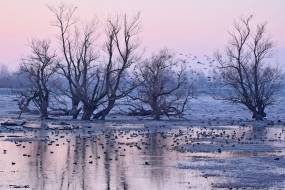 Wildlife_Photography-Nature_Photo_Portal-Philippos_Katsiyiannis-Ducks_at_dawn-1