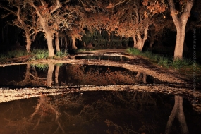 Wildlife_Photography-Nature_Photo_Portal-Philippos_Katsiyiannis-Forest_at_night-1