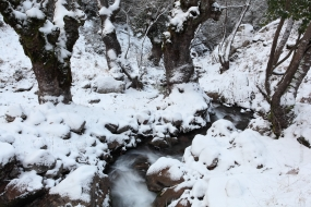Wildlife_Photography-Nature_Photo_Portal-Philippos_Katsiyiannis-Snowy_brook-1