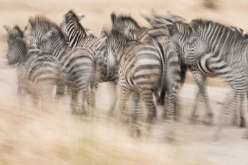 Ingrid Vekemans Photo Safaris