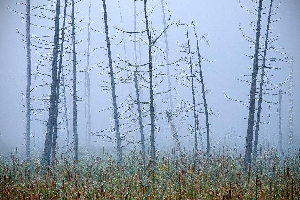 Nature_Photo_Portal_Kyle_McDougall_ForestGhosts