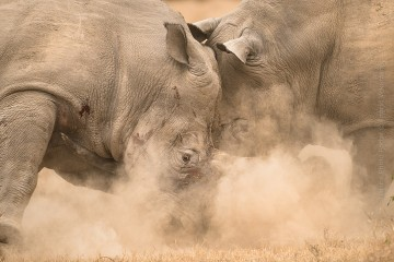 Wildlife_Photography-Nature_Photo_Portal-Ingrid_Vekemans-Battle_Of_Giants-1