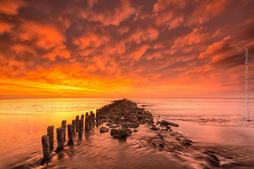 A dramatic colorful sunset near Lauwersoog with the tide retreating