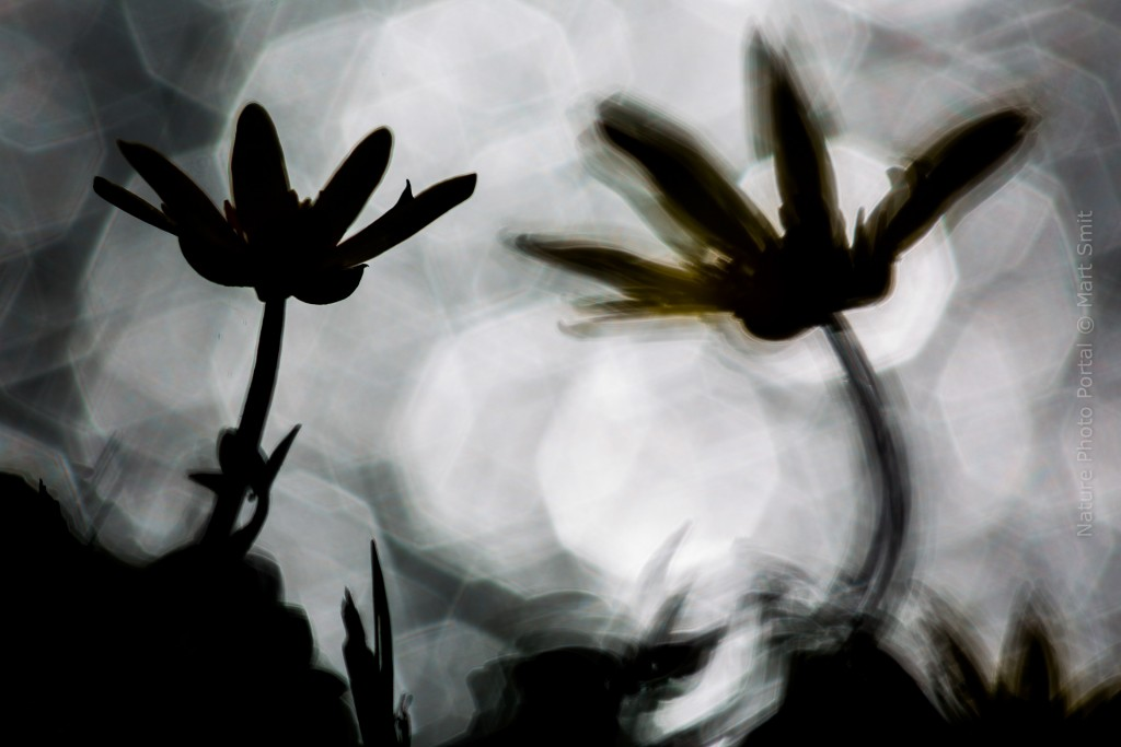 Plant photography Nature Photo Portal Mart Smit Abstract flower