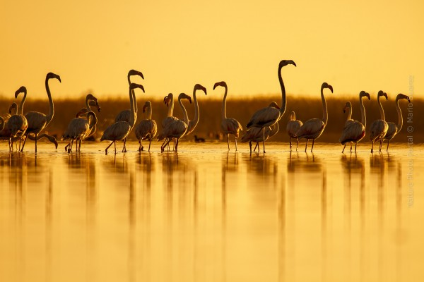 Bird Photography Nature Photo Portal Mario Suarez Flamingos