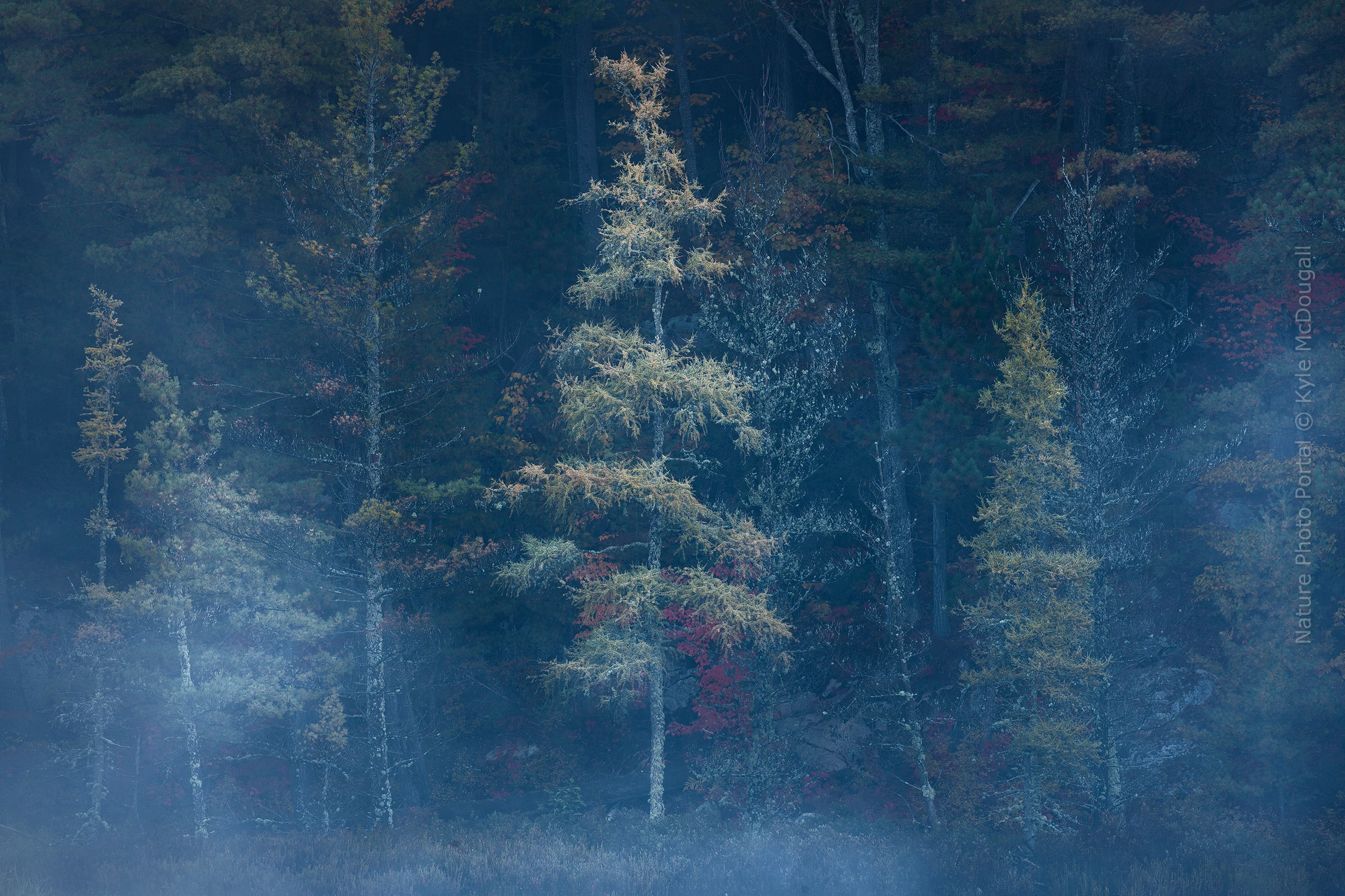 Conquering The Clutter- Tips For Creating Strong Images In The Forest