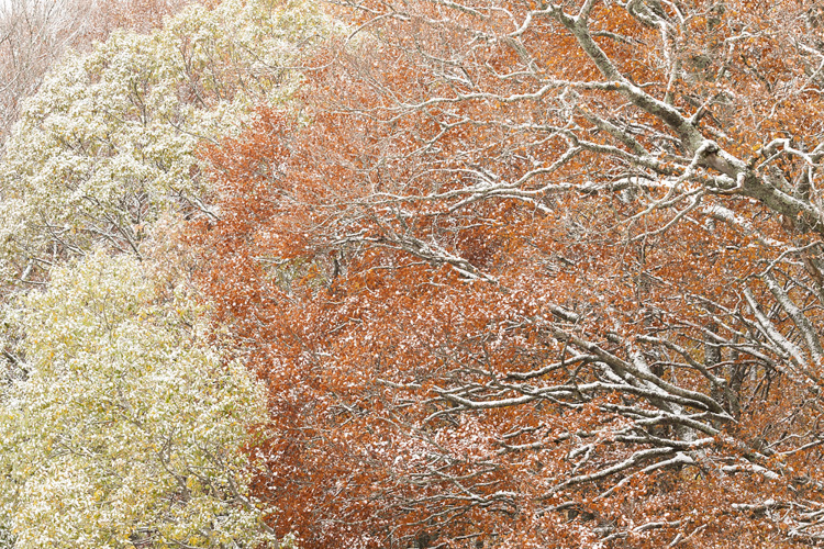 Tree branches close up with fall colors and snow