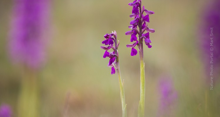 Orchids are fascinating plants