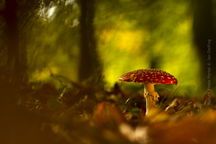 Macro_photograpy-Nature_Photo_Portal-Jan_Dolfing-Toadstool-2