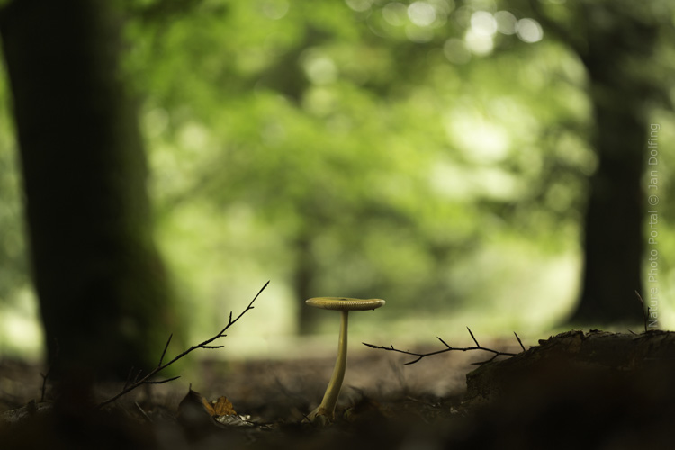 Macro_photograpy-Nature_Photo_Portal-Jan_Dolfing-Toadstool-4