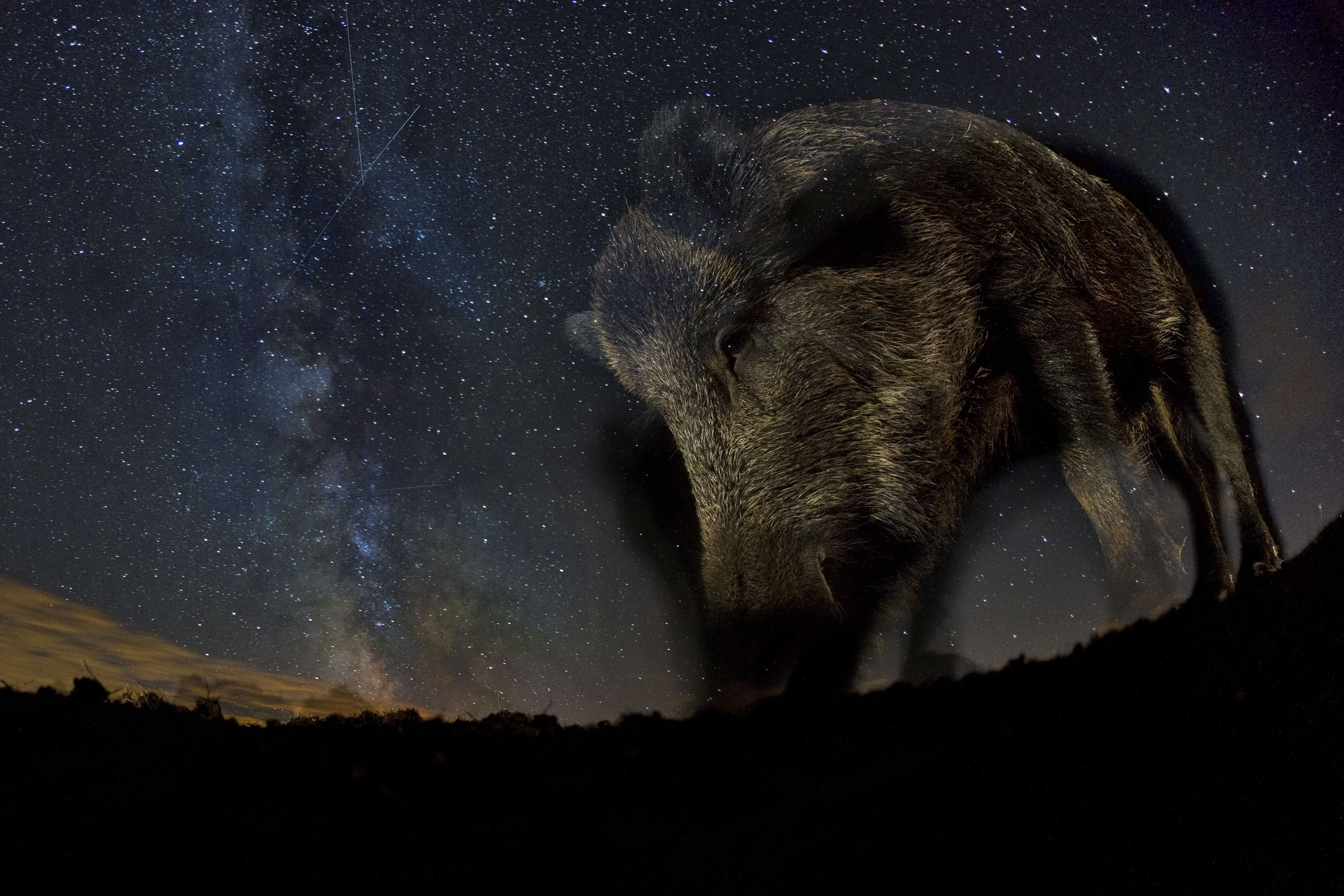 GDT European Wildlife Photographer of the Year 2015