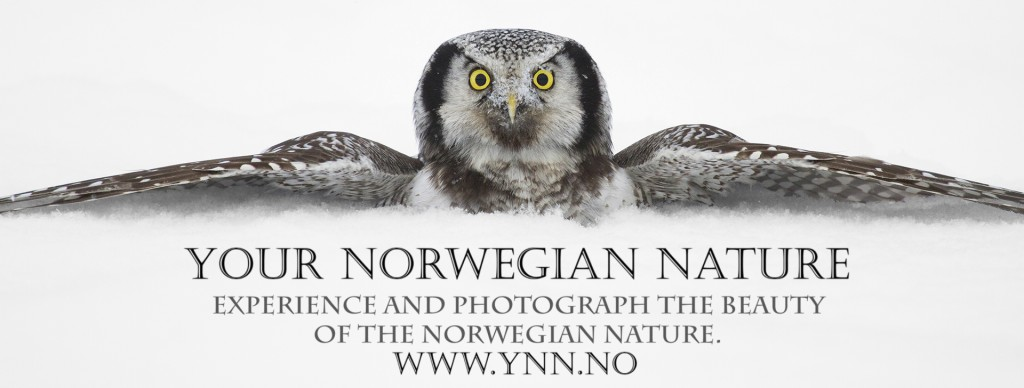 Logo Your Norwegian Nature