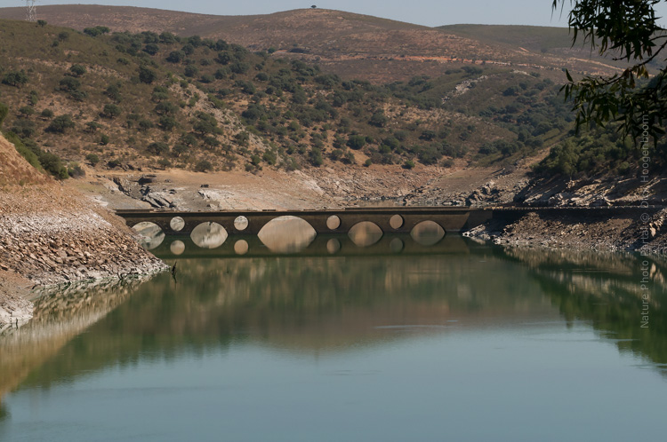 Macro photography Nature Photo Portal Dick Hoogenboom Extremadura Bridge at the river Tagus