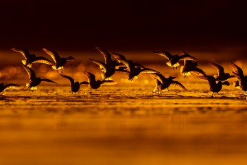 Bird photography Photography Nature Photo Portal Mario Suarez Calidris migration 2