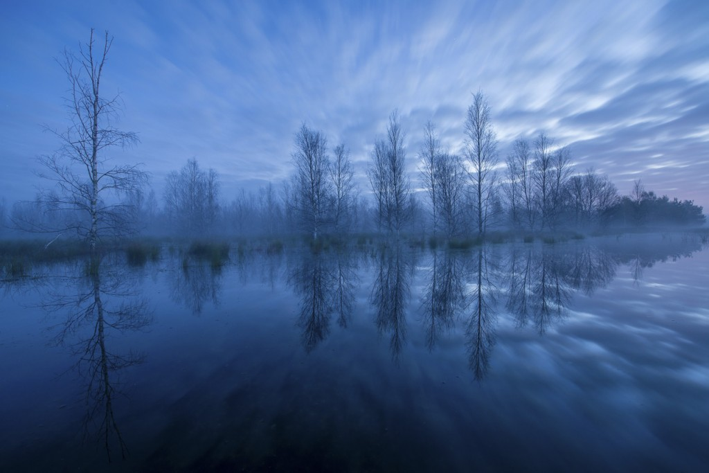 """The members' contest """"GDT Nature Photographer of the Year"""" is owned by GDT / Gesellschaft Deutscher Tierfotografen."""