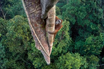 Nature_Photo_Portal-© Tim Laman_Wildlife Photographer of the Year_ Grand Title winner