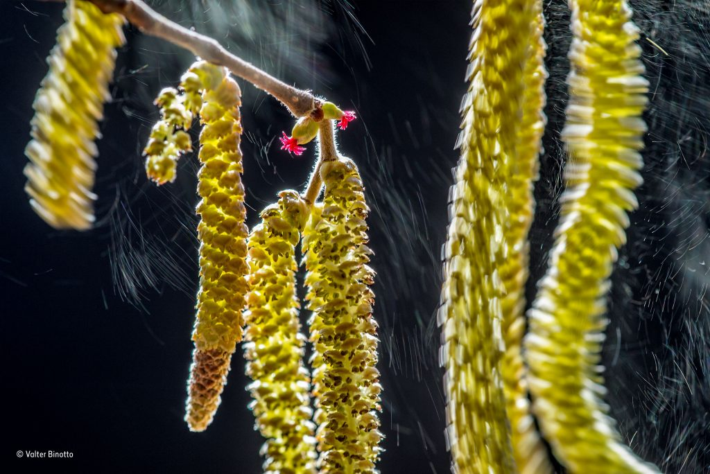 Nature_Photo_Portal-© Valter Binotto_Wildlife Photographer of the Year_ Plants winner