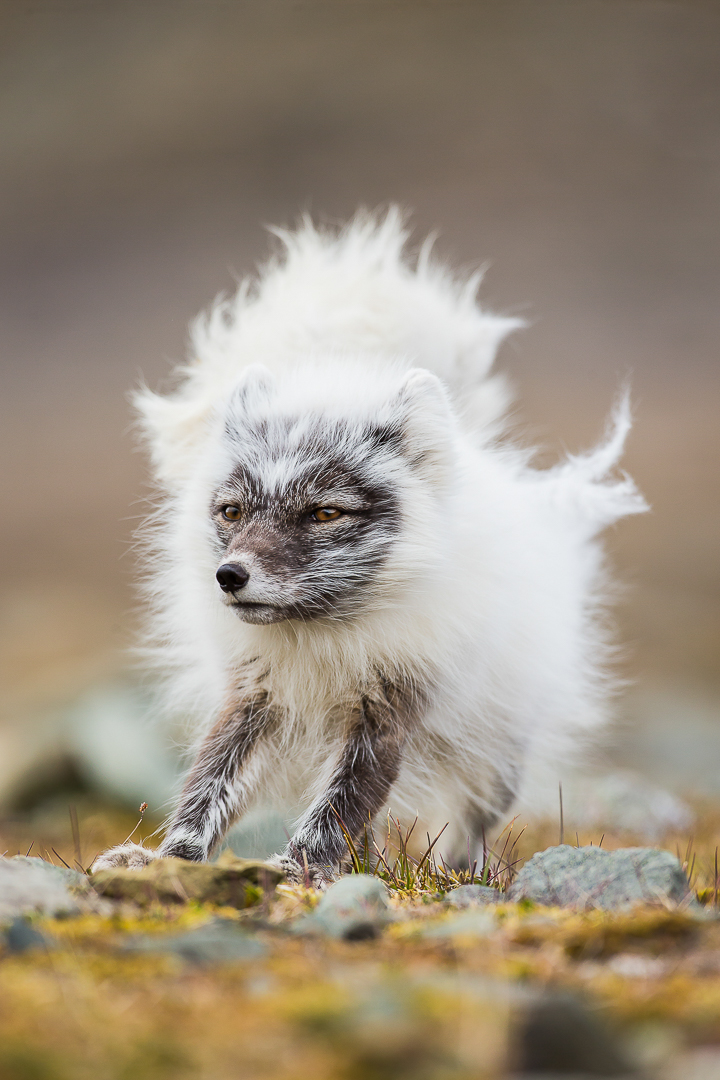 Nature_Photographer_of_the_Year_contest_2018-sponsor-Buteo_Photo_Gear-C02_NPOTY-2018_Kevin-Morgans_Bad-hair-day_Runner-up